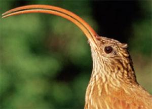 Foto de pássaro e de mais bichos fazem parte de mostra no Museu de Zoologia da Usp