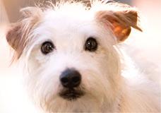 Cãozinho aparece em cena de ''Hotel for Dogs'', filme que estréia em 2009