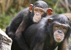 O pêlo é considerado um traço dos mamíferos