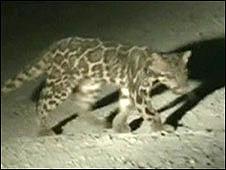 A Wilting/A Mohamed/Cat News