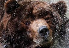 Primeira-dama da França se diz comprometida com a proteção dos ursos